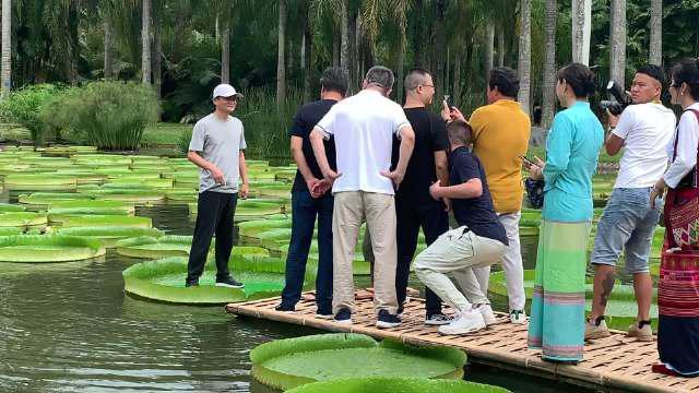 马云来到中国科学院西双版纳热带植物园……