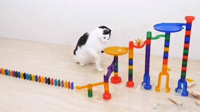 猫启动的多米诺骨牌,过于流畅,爱了爱了