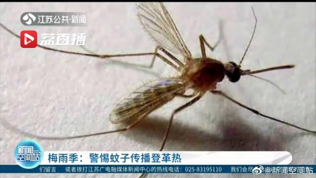 梅雨季:警惕蚊子传播登革热