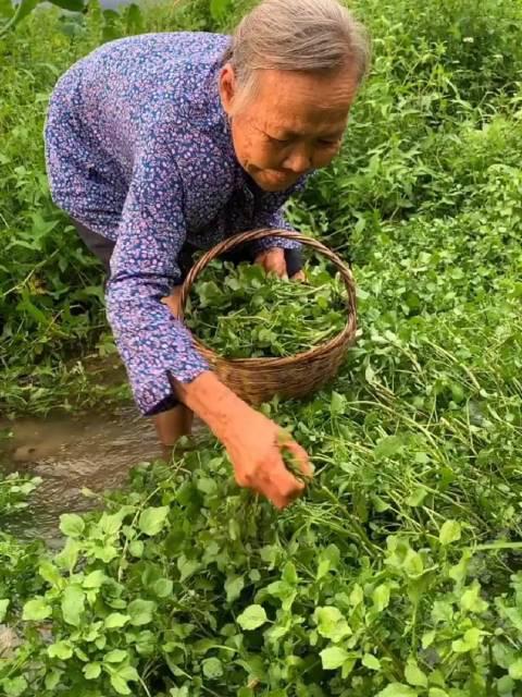 大山里的生活日记 最好吃的纯天然野菜