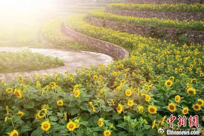 """南方暴雨""""持续营业"""",在浙江黄岩平田,漫长的梅雨季……"""