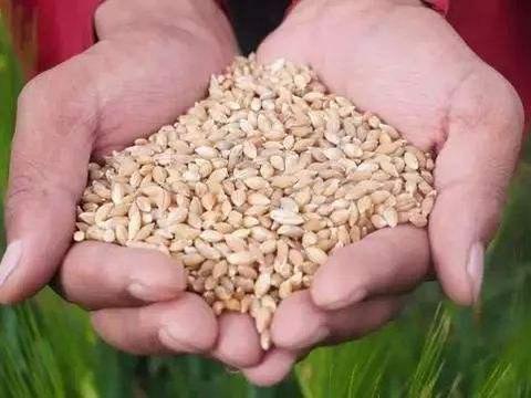 """西藏开展农产品质量安全专项整治""""利剑""""行动"""