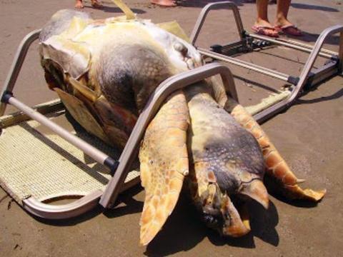 女子在海边发现一个庞然大物,走近查看后这画面让人羞愧不已!