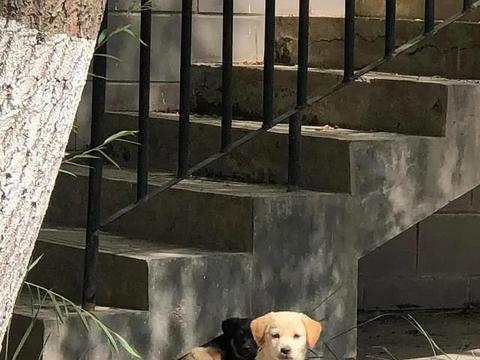 在小区发现一窝小狗崽