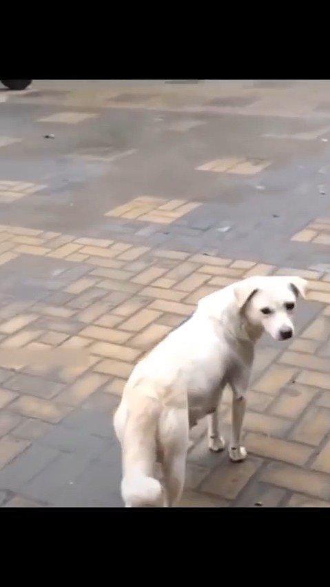 小狗狗被领养,狗妈妈来送别。转头那个瞬间...