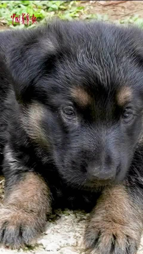 """超萌来袭!兵哥哥执勤时被小警犬""""强撩""""!你想要大的还是小的?"""