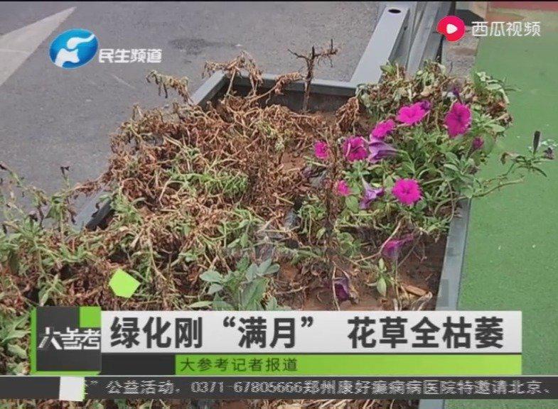 """郑州未来路修的漂亮,只是路边花草枯萎,市民质疑是""""面子工程""""?"""