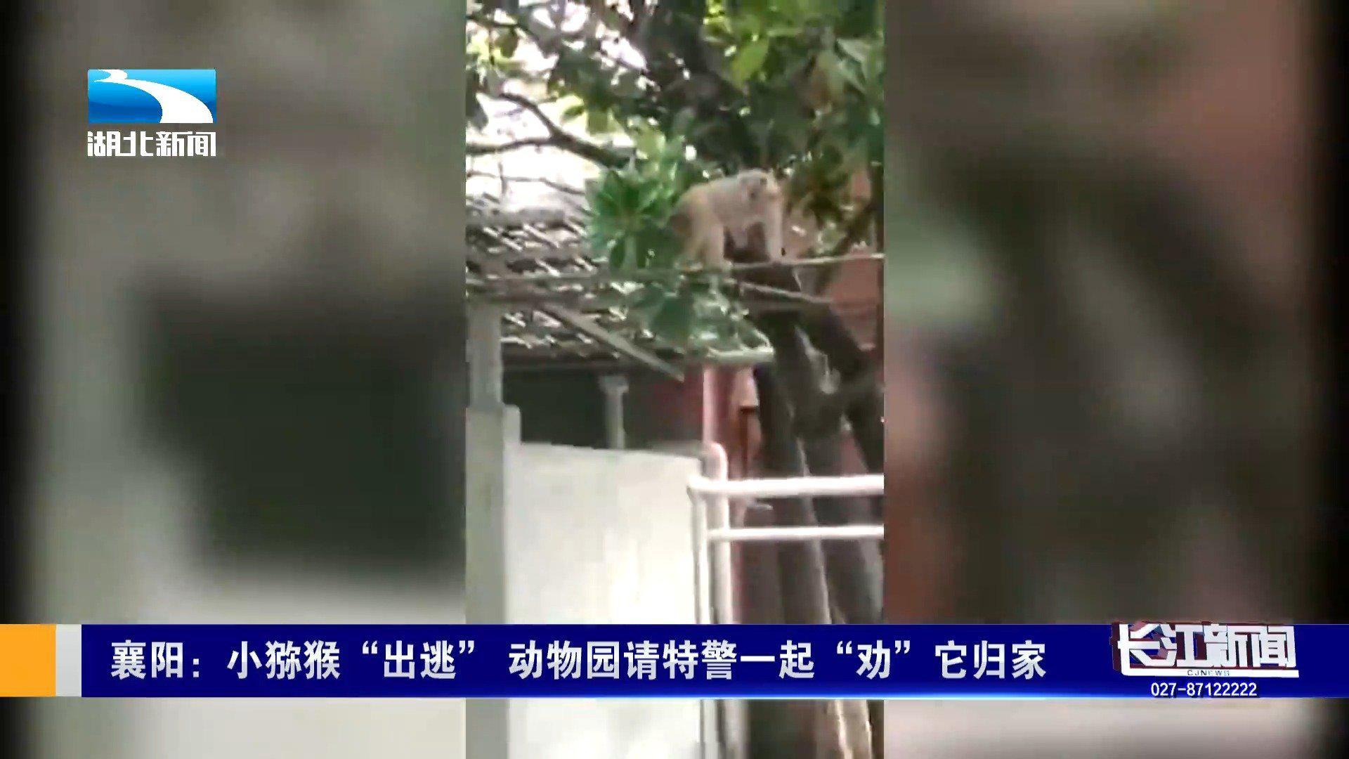 """惊!襄阳小猕猴出逃 动物园方无奈请特警帮忙""""劝""""它回家"""