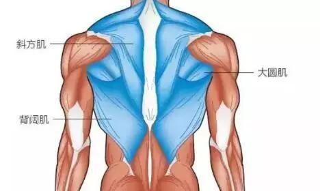女生练背计划:8个练背动作,针对性强,效果好!拥有完美背部!