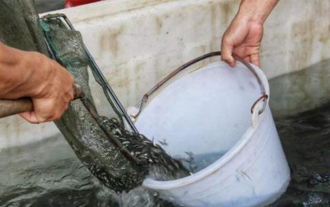 山上从没养鱼的水坑,为什么时间久了会有小杂鱼?鱼是哪来的?