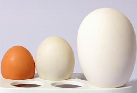 """孕晚期为什么吃鹅蛋?真正作用不是""""去胎毒"""""""