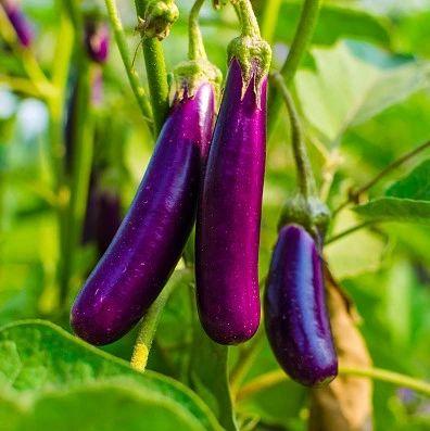 健康丨今夏必吃的9种紫色食物,抗氧化,护心血管!宁愿不吃肉也不要错过