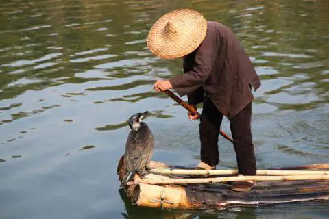 用老方法捕鱼艰难度日,如今河上卖艺,每天收入不低