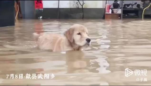 儿不嫌母丑,狗不嫌家贫,在中国传统文化中狗是护家的忠畜……