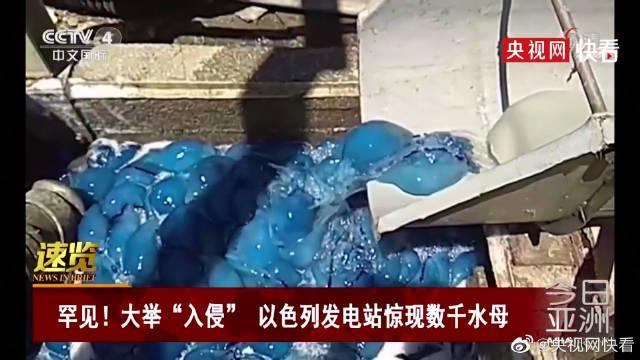 """大举""""入侵"""" 以色列发电站惊现数千蓝色水母"""