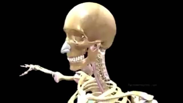 人体的奥妙,身体骨架的搭建……