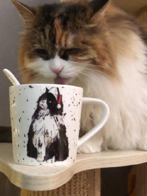 猫咪洒水车上线~ 闹闹喝水最省心,看到杯子就想去玩水……