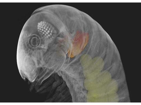 章鱼并非地球原住民?科学家发现不简单,疑似是外星生物!