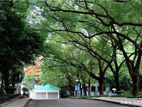 深圳中学要和深国交一比高下? 竟然也要开设A-Level课程