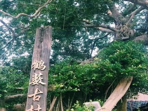 """深圳一个""""文艺""""古村,位于龙岗,靠近海边,少有游客驻足"""