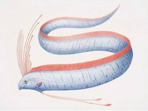 渔民出海捕鱼,意外网到了2条3米长的大鱼,回去宰杀后就后悔了!