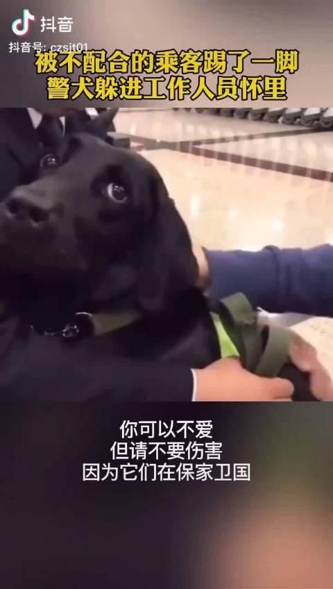 检疫犬被不配合的乘客踢了一脚,委屈躲在工作人员怀里求安慰……