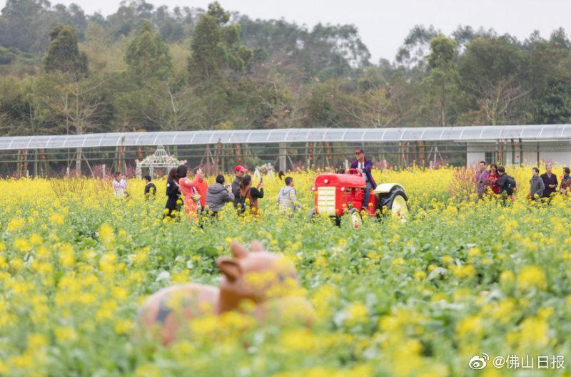 佛山3个景区入选广东省自然教育基地名单