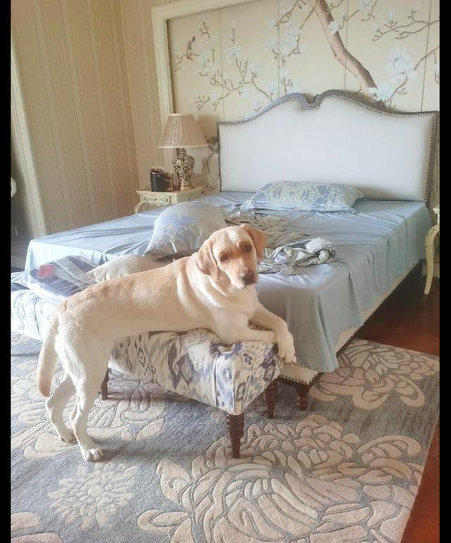 狗狗跟主人学,每天呆坐在镜子前臭美,沉迷于自己颜值无法自拔!
