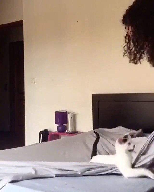 当你养猫后,换床单时能有多麻烦