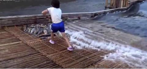 日本人发明超神奇渔网,捕鱼超轻松,一放下去鱼会自动游到网里!