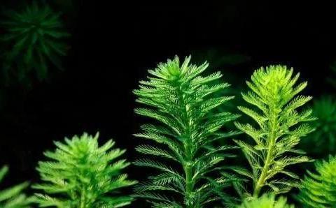 绿色植物净化环境,你想到用哪些了吗?