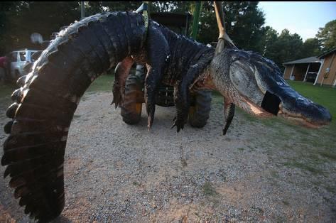 一家人外出野营,没想到居然捕获巨型鳄鱼