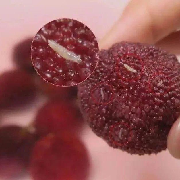 杨梅里面有小虫?荤素搭配的水果,你能接受吗?