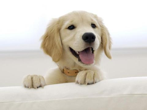 流浪狗有睡眠障碍,时常在噩梦中惊醒,爱心小姐姐救助了它