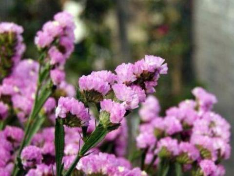 4种花是花中劳模,一年四季花开不停,开花量大,花开枝繁叶茂