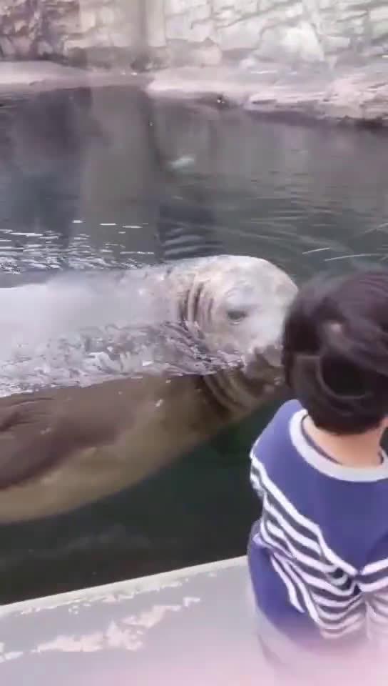 海豹:小朋友,游泳健身了解一下,你看可好玩儿呢