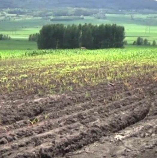 水流经之处,庄稼不生、草也不长!这块农耕地常年被水淹,哪儿来的水?