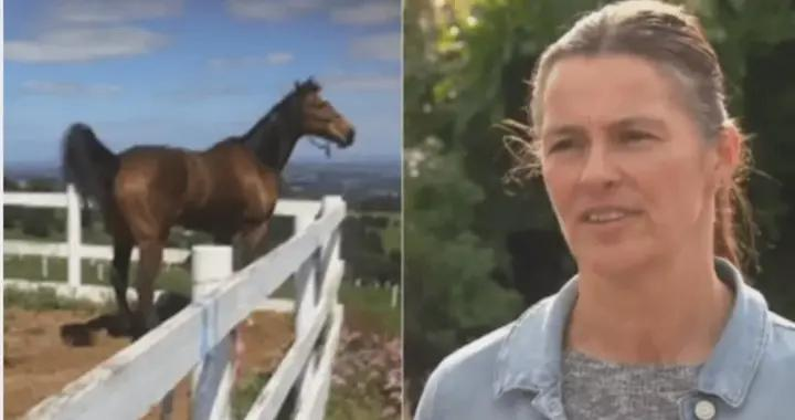 澳女子外出喂马竟被罚1652刀,怒怼警察,离谱罚单还不止这一张