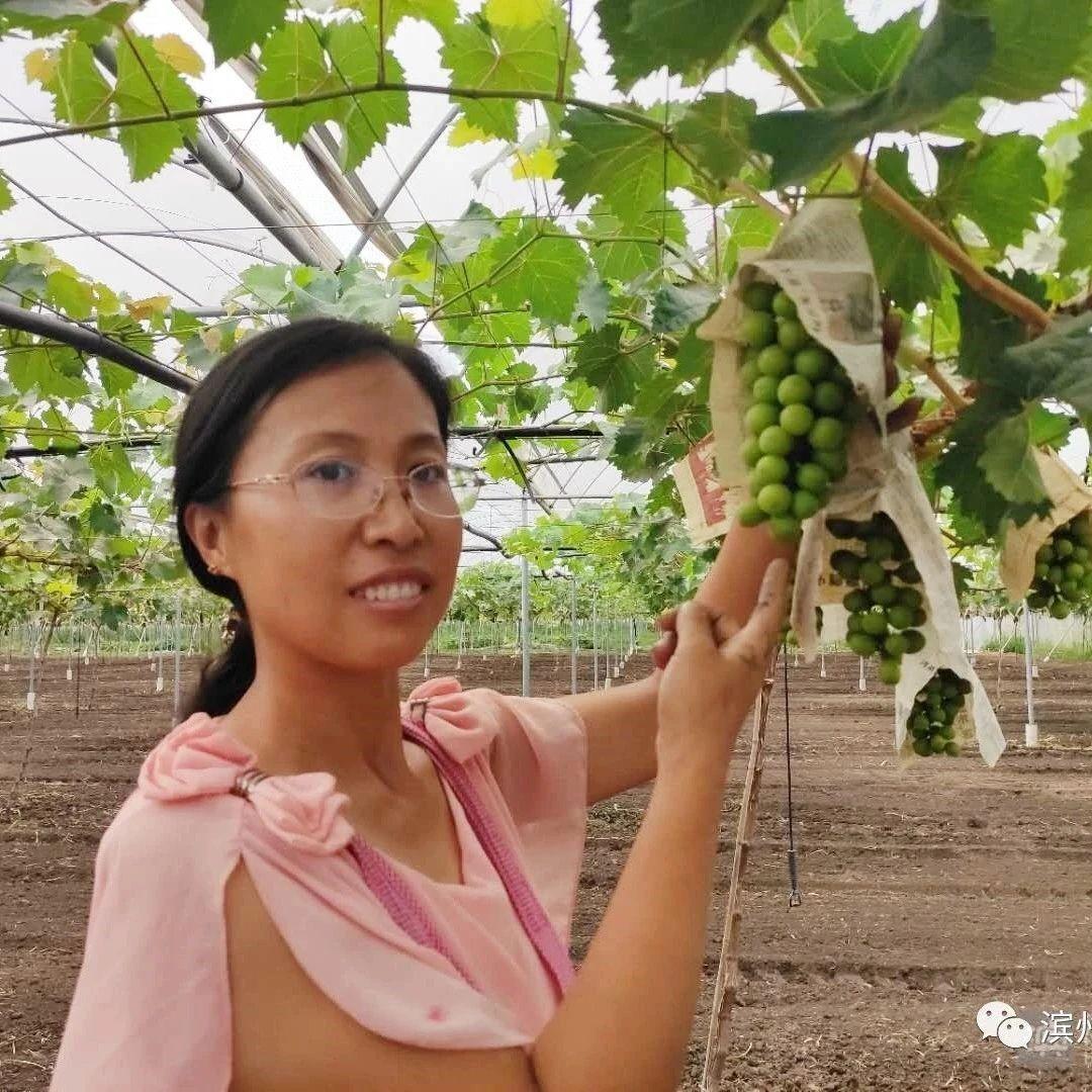 """博兴曹王与中国农科院合力打造!喝""""矿泉水""""长大的葡萄中秋上市"""