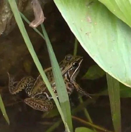 此前不堪忍受蛙声一片的这个小区现在如何了? 老住户:习惯就好