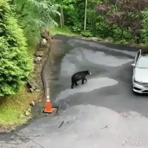 熊熊跑回家后对妈妈说:妈妈我刚刚打开了地狱之门!