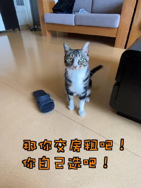 现在这小猫咪玩的都这么狠吗?