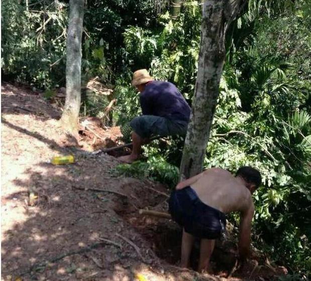 男子不顾老父亲的劝阻,为发财砍倒30年黄花梨树
