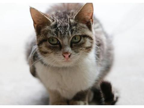 异食癖猫咪怎么办?预防猫咪误食受伤是首要任务