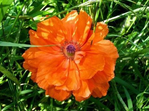 7月上旬期间,月老牵姻缘线,桃花朵朵开,会脱单的四大生肖