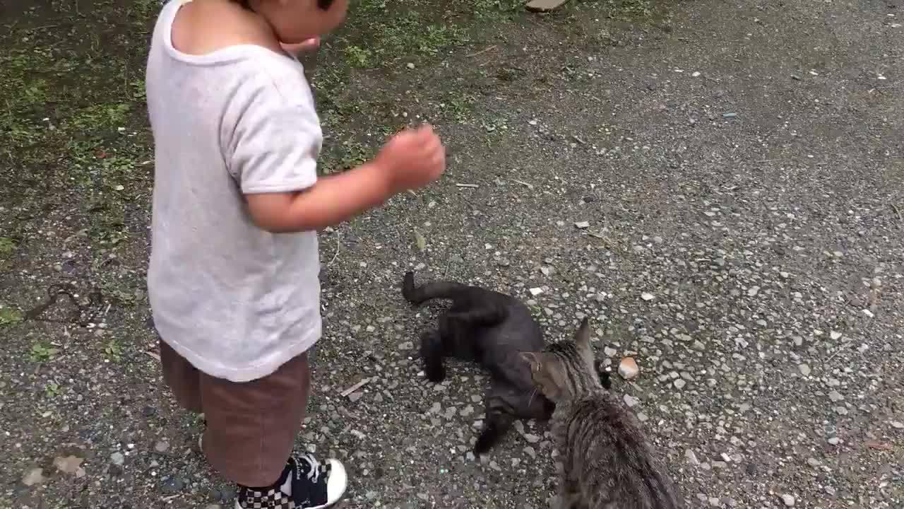 看到两只猫咪快打起来了,小盆友就过去劝和...