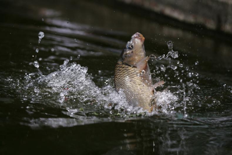 夏天的鱼都躲哪去了?原来都藏在这四个地方
