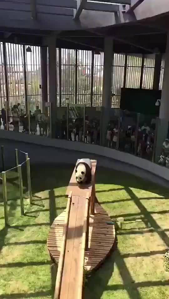 熊猫:怎么样 票没白买吧