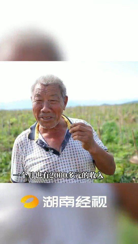 """永州新田:药材形成产业链 山沟沟变身""""幸福窝"""""""