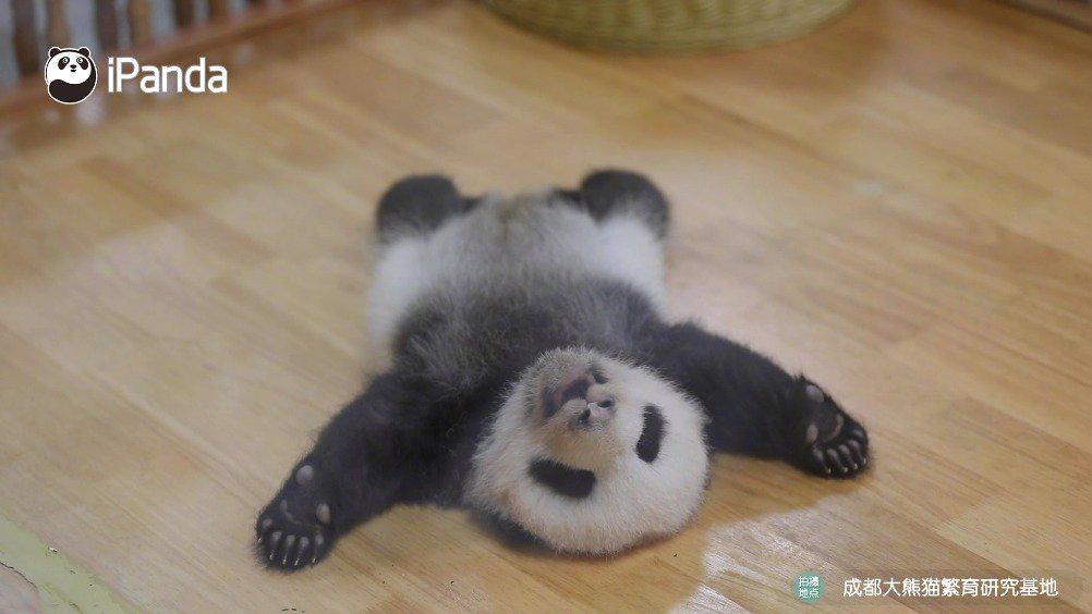 么就是翻不过去啊,谁来帮帮我 iPanda熊猫频道